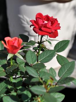カリナ2010‐11-19DSC_0719.jpg